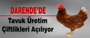 Darende'de Tavuk Üretim Çiftlikleri Açılıyor