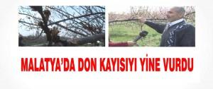 Malatya'da Don Kayısıyı Yine Vurdu