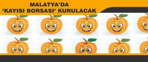 Malatya'da 'Kayısı Borsası' Kurulacak