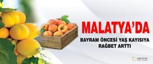 Malatya'da Bayram Öncesi Yaş Kayısıya Rağbet Arttı