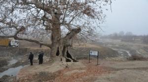 Tarihi Çınar Rekreasyon Projesi Hayata Geçiyor
