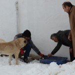 Sokak Hayvanlarına Yem Bırakılıyor