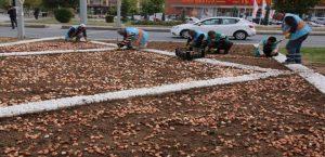 Elazığ Belediyesi, Rengarenk Bir Bahar İçin Çalışmalara Başladı
