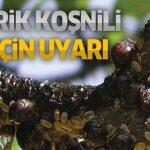 Kayısı Ağaçlarında Erik Koşnili hastalığı