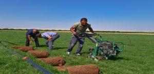 TİGEM'den Kiralanan Araziye Rulo Çim Ekimi Yapıldı