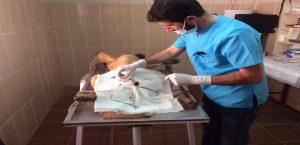 Adıyaman Belediyesi'nden Hasta Köpeğe Tıbbi Müdahale