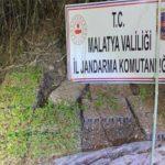 Malatya'da Kamu Arazisine Hint Keneviri Ektiler